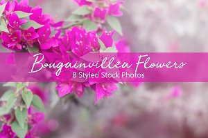 Bougainvillea Flowers Set