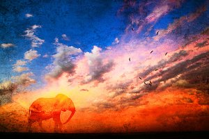 Vibrant African sunset