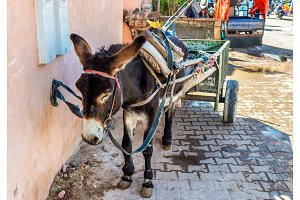 Working donkey with a cart on a street of Marrakesh, Morocco