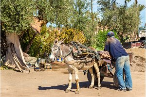 Donkey with a worker on a street of Marrakesh, Morocco