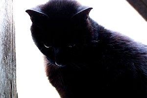 Black Cat Looking Down