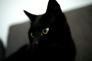 Black Cat - Yellow Eyes