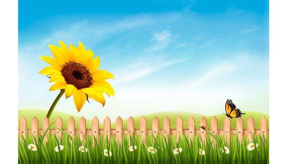 Summer Nature Landscape Background