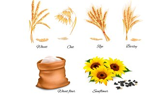 Ears of wheat, oat, rye, sunflower