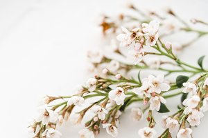 Stock Photo - Dainty Floral