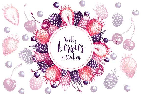Vector Berries Collection