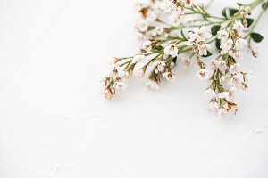Stock Photo - Pretty Floral