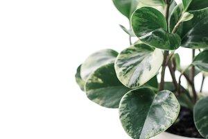 Stock Photo - Plant - Lifestyle
