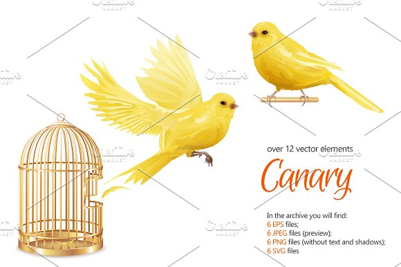 Canary Birds Set