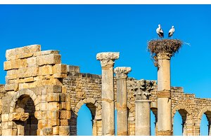 Ruins of a roman basilica at Volubilis, Morocco