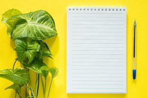 Notepad for notes, green plant leaves on yellow desktop, flat lay, copy space.