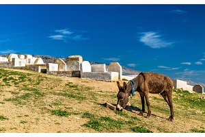 Donkey near Marinid Tombs in Fes, Morocco