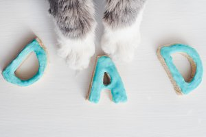 Lovely cat's paws and the word DAD