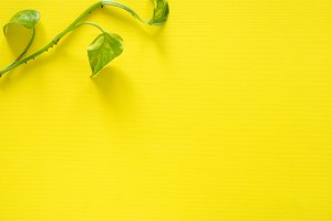 Green plant leaves on yellow background, flat lay, copy space.