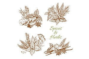 Spices or herbs vector sketch seasonings