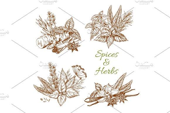 Spices Or Herbs Vector Sketch Seasonings