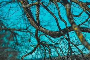 Branches of an old dead tree against