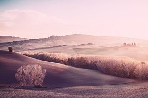 Vintage sunny landscape