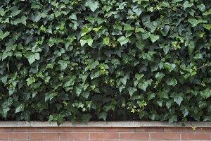 Background flower green