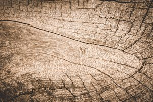 Texture old wood brown color BG