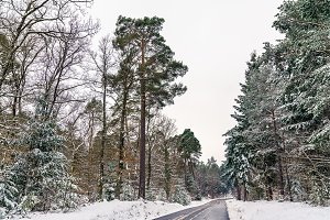 Road in the Vosges mountains in winter. Bas-Rhin department of France