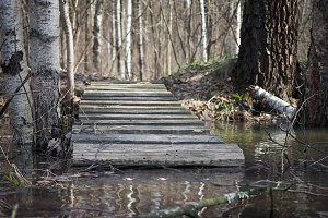 Old bridge to the stream in the birch forest