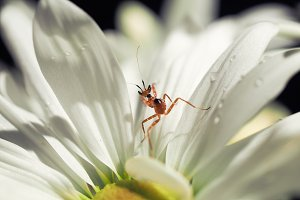 Little mantis in a beautiful white flower