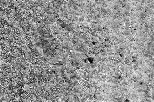 Concrete Wall Detail in Black White