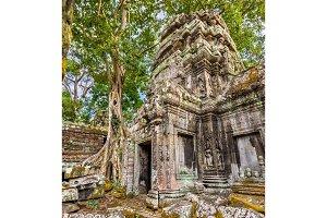 Ta Prohm Temple at Angkor in Cambodia