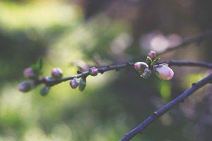 Flowers buds, freshness spring!