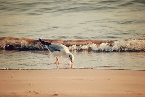 Gull on the beach in sicily (sepia)