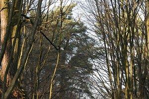 village road through forest