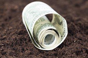 twisted American dollar