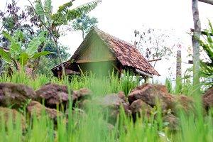 Hut in the rice field