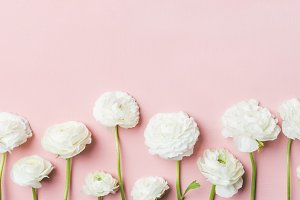 Saint Valentines Day background with ranunculus flowers, wide composition