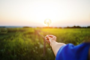 Girl's hand holding a dandelion