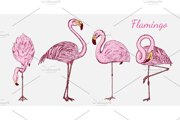 Pink Flamingo Hand Drawn Vector Birds Sketch Graphic Vintage Style Phoenicopteridae Tropical Animal