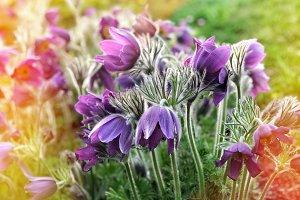 Spring easter flowers