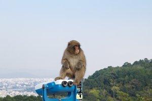 Monkey in Kyoto