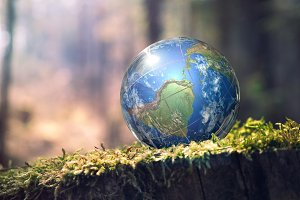 earth planet on moss in the forest