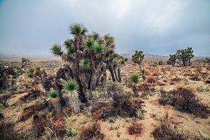 Arizona desert landscape at cloudy
