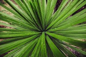 Green fresh wet plant leaves
