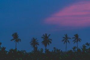 silhouette coconut tree on sunrise