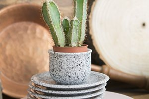 Cactus and plates