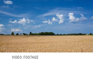Timelapse of scene with wheat field