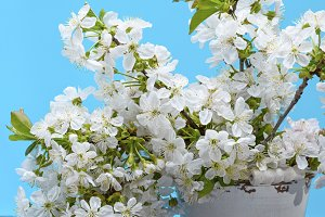 bouquet of white flowering cherries
