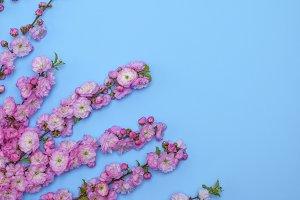 pink flowers Louiseania triloba