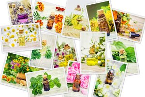 medicinal herbs collage.