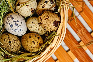 Quail eggs in basket. Easter. Diet.
