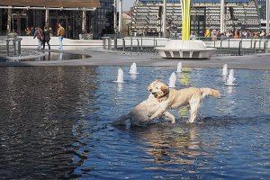 Dog bathing in fountain